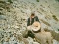 stan_sheep_005